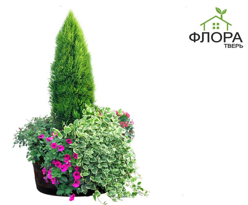 Где купить в твери цветы для сада и огорода как красиво оформить подарок мужчине